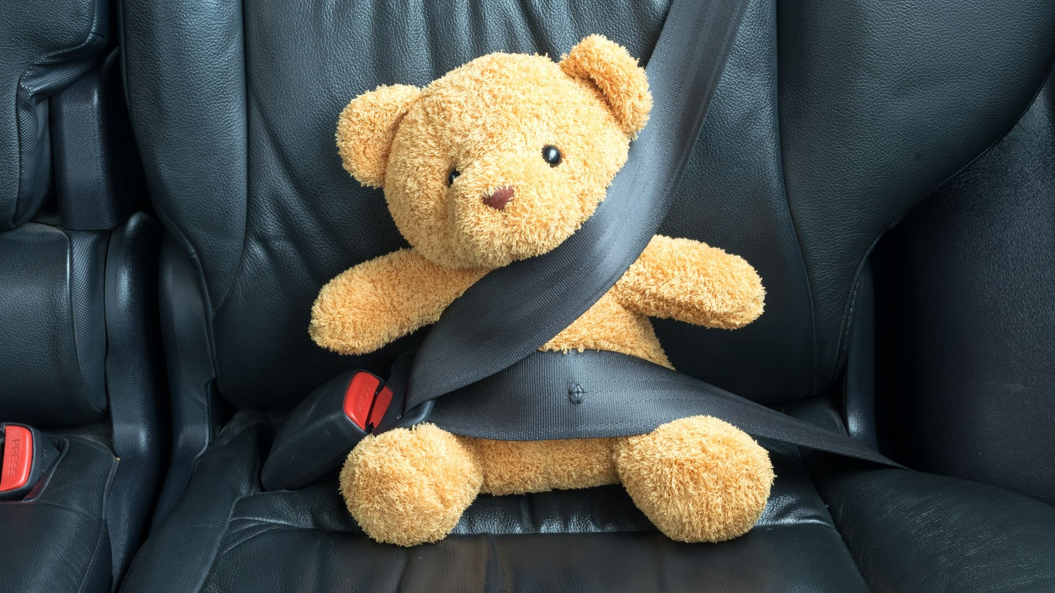 teddy bear in back seat